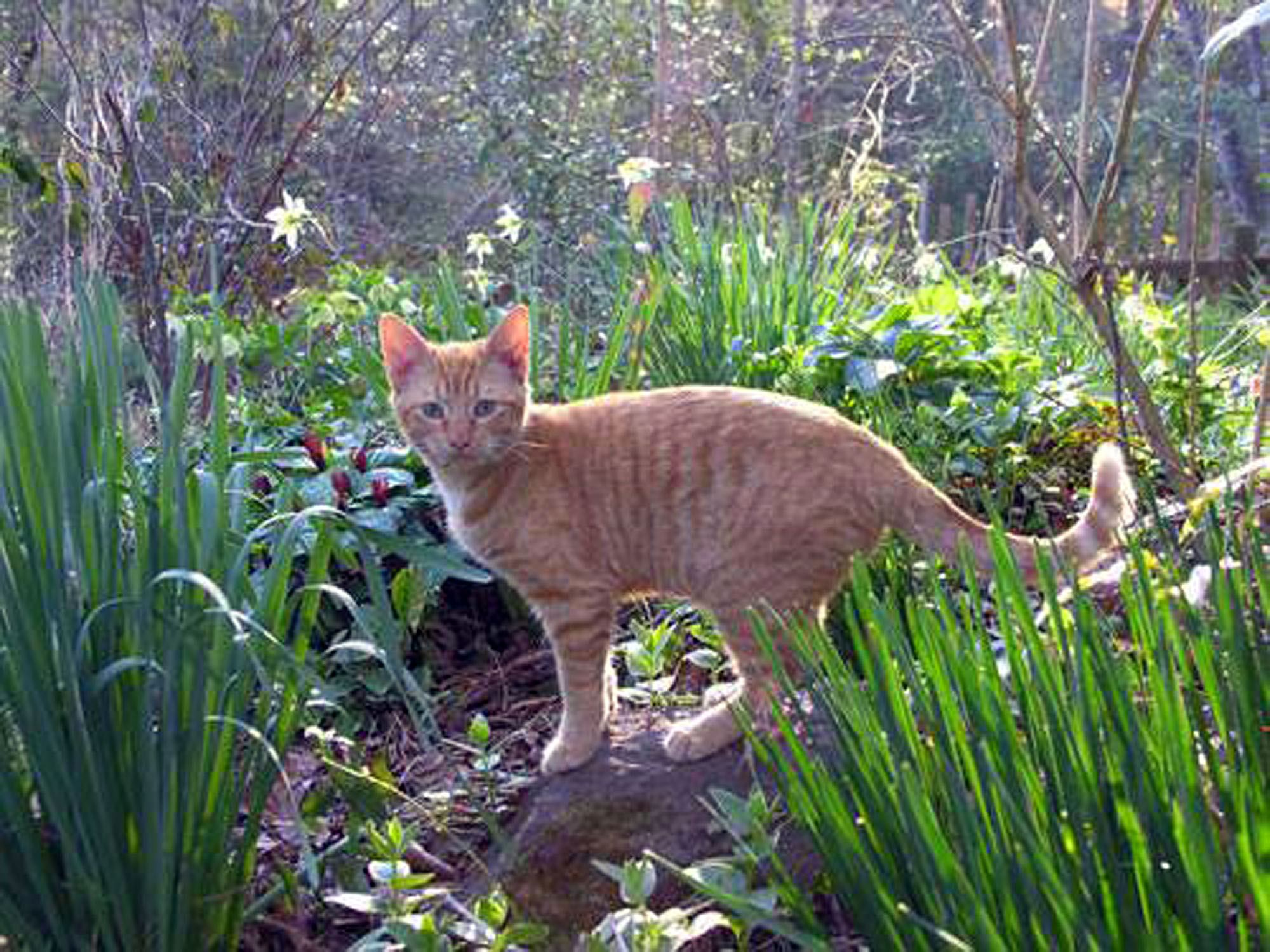 Nice He Was Quite A Garden Cat.