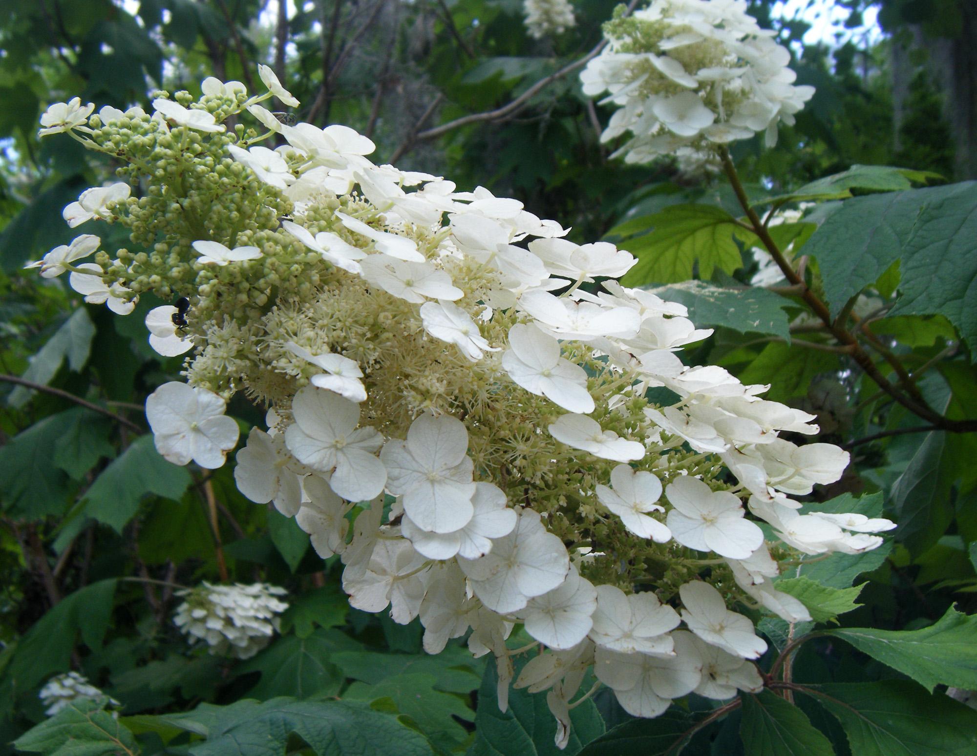 Yardflower Flower Arrangements